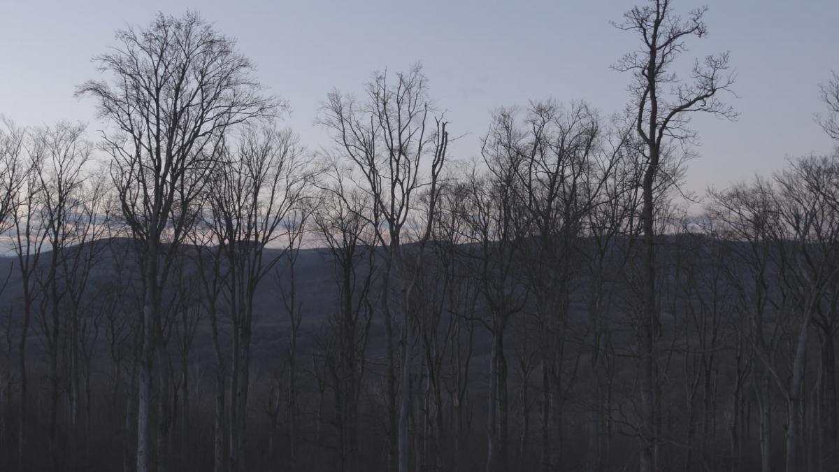 Nahtod_Bäume©Metafilm